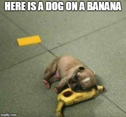 HERE IS A DOG ON A BANANA | made w/ Imgflip meme maker