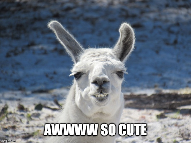 Derp | AWWWW SO CUTE | image tagged in derp | made w/ Imgflip meme maker
