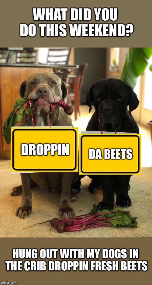 Beet Box Dogg! | WHAT DID YOU DO THIS WEEKEND? HUNG OUT WITH MY DOGS IN THE CRIB DROPPIN FRESH BEETS DROPPIN DA BEETS | image tagged in dogs,vegetables,rapper | made w/ Imgflip meme maker
