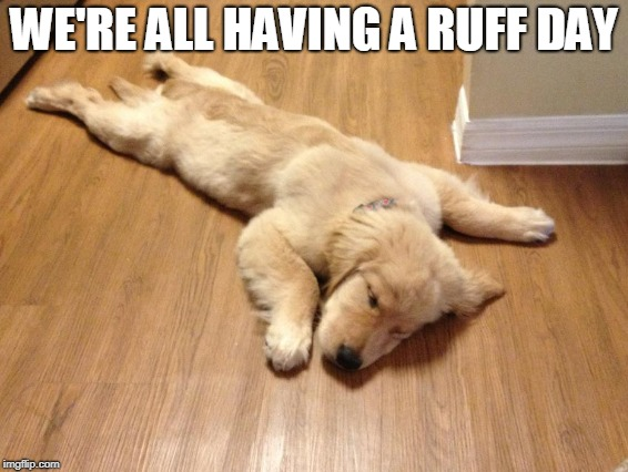 WE'RE ALL HAVING A RUFF DAY | made w/ Imgflip meme maker