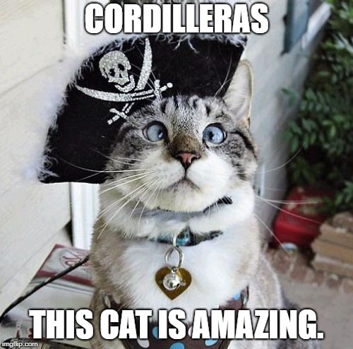 Spangles | CORDILLERAS THIS CAT IS AMAZING. | image tagged in memes,spangles | made w/ Imgflip meme maker