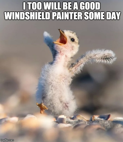 Celebration birdie | I TOO WILL BE A GOOD WINDSHIELD PAINTER SOME DAY | image tagged in celebration birdie | made w/ Imgflip meme maker
