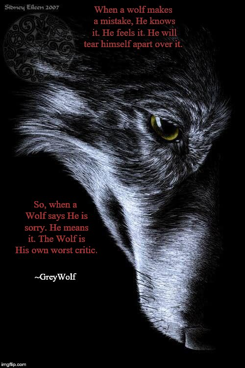 GreyWolf | When a wolf makes a mistake, He knows it. He feels it. He will tear himself apart over it. So, when a Wolf says He is sorry. He means it. Th | image tagged in wolf,sorry,i'm sorry,greywolf | made w/ Imgflip meme maker