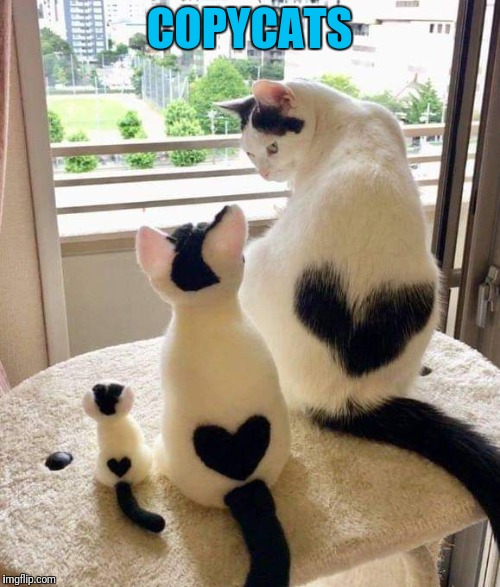 Imitation is the best form of flattery | COPYCATS | image tagged in cats,copycat | made w/ Imgflip meme maker