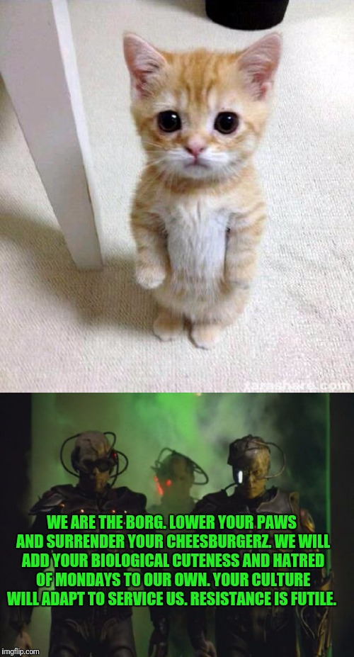 Borg Kitty | WE ARE THE BORG. LOWER YOUR PAWS AND SURRENDER YOUR CHEESBURGERZ. WE WILL ADD YOUR BIOLOGICAL CUTENESS AND HATRED OF MONDAYS TO OUR OWN. YOU | image tagged in star trek,cute kitten,the borg,star trek the next generation,borg,star trek tng | made w/ Imgflip meme maker