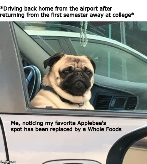 *Driving back home from the airport after returning from the first semester away at college* Me, noticing my favorite Applebee's spot has be | image tagged in dog memes,dogs,pugs,eating healthy | made w/ Imgflip meme maker
