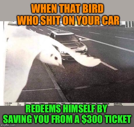 Bird of the Year | WHEN THAT BIRD WHO SHIT ON YOUR CAR REDEEMS HIMSELF BY SAVING YOU FROM A $300 TICKET | image tagged in good,bird,no,traffic,ticket,funny memes | made w/ Imgflip meme maker