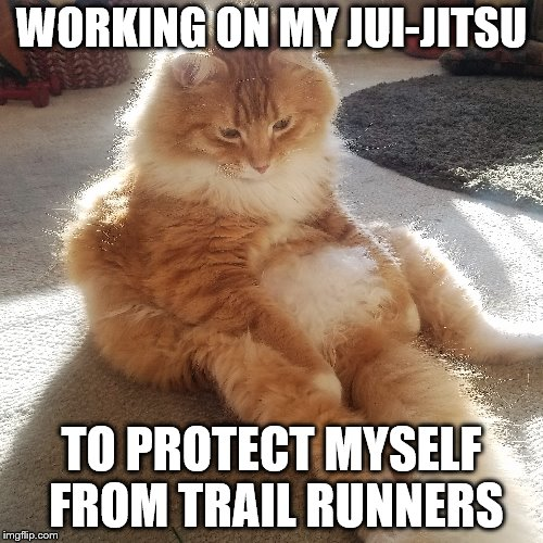 cat jui jitsu | WORKING ON MY JUI-JITSU TO PROTECT MYSELF FROM TRAIL RUNNERS | image tagged in cat,running | made w/ Imgflip meme maker