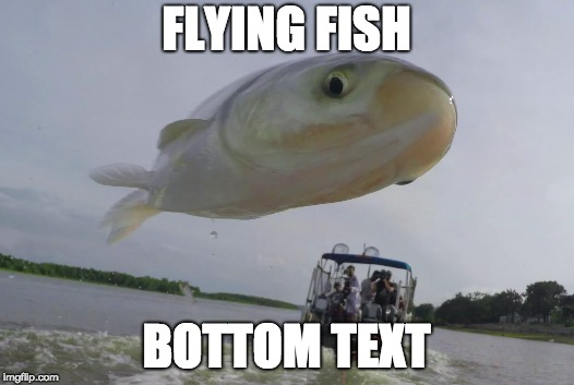 Flying Fish | FLYING FISH BOTTOM TEXT | image tagged in flying fish,bottom text | made w/ Imgflip meme maker