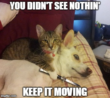 Cat Vs Dog | YOU DIDN'T SEE NOTHIN' KEEP IT MOVING | image tagged in cat,dog,vs,keep scrolling | made w/ Imgflip meme maker