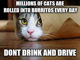 Funny animals | MILLIONS OF CATS ARE ROLLED INTO BURRITOS EVERY DAY DONT DRINK AND DRIVE | image tagged in funny animals | made w/ Imgflip meme maker