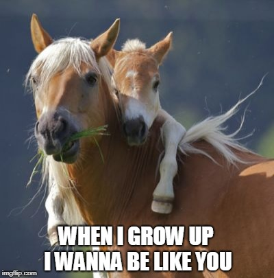 Foal Of Mine | WHEN I GROW UP I WANNA BE LIKE YOU | image tagged in memes,foal of mine | made w/ Imgflip meme maker