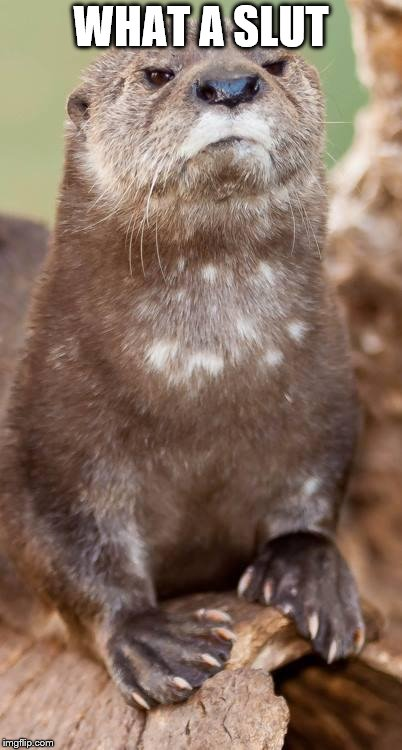 Disapproving Otter | WHAT A S**T | image tagged in disapproving otter | made w/ Imgflip meme maker