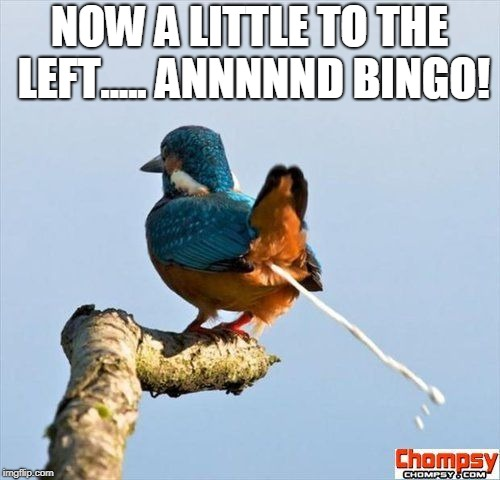 Bird pooping | NOW A LITTLE TO THE LEFT..... ANNNNND BINGO! | image tagged in bird pooping | made w/ Imgflip meme maker