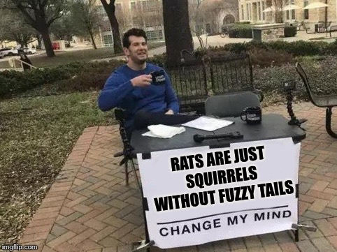 Change My Mind | RATS ARE JUST SQUIRRELS WITHOUT FUZZY TAILS | image tagged in change my mind,rats,rodents,mice,mr602 | made w/ Imgflip meme maker