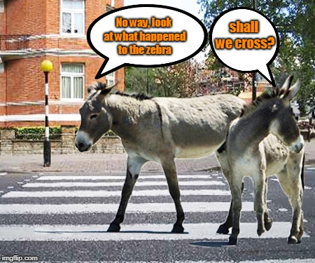 Two donkeys are standing at a roadside | shall we cross? No way, look at what happened to the zebra | image tagged in funny | made w/ Imgflip meme maker