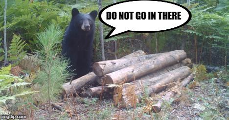 does a bear poop in the woods? | DO NOT GO IN THERE | image tagged in bear,woods | made w/ Imgflip meme maker