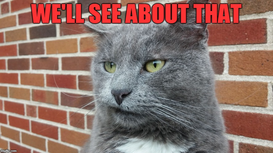 Evil Cat | WE'LL SEE ABOUT THAT | image tagged in evil cat | made w/ Imgflip meme maker