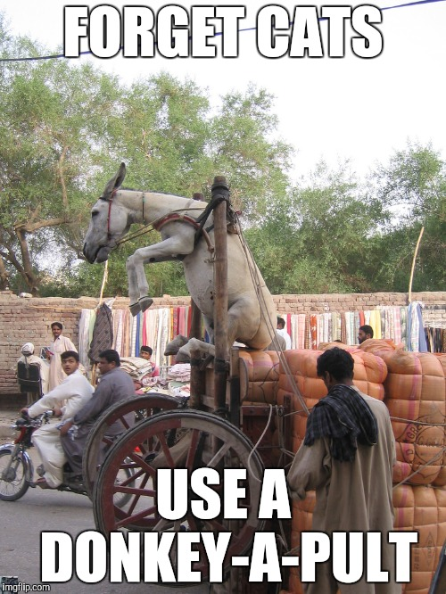 Modern Siege Engines | FORGET CATS USE A DONKEY-A-PULT | image tagged in catapult,yayaya | made w/ Imgflip meme maker