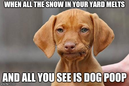Winter Problems | WHEN ALL THE SNOW IN YOUR YARD MELTS AND ALL YOU SEE IS DOG POOP | image tagged in dissapointed puppy,memes,winter is here,dogs | made w/ Imgflip meme maker