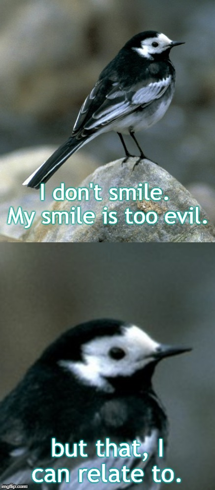 Clinically Depressed Pied Wagtail | I don't smile. My smile is too evil. but that, I can relate to. | image tagged in clinically depressed pied wagtail | made w/ Imgflip meme maker