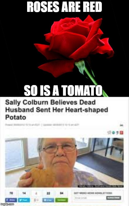 roses are red... | ROSES ARE RED SO IS A TOMATO | image tagged in rose | made w/ Imgflip meme maker