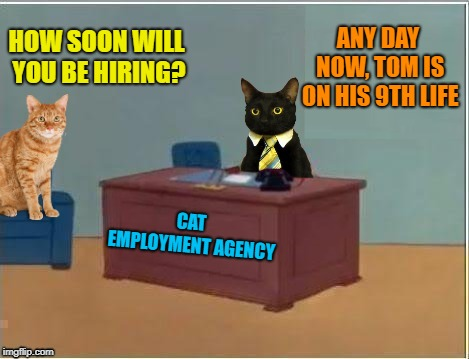 Alley-Cat Work | HOW SOON WILL YOU BE HIRING? ANY DAY NOW, TOM IS ON HIS 9TH LIFE CAT EMPLOYMENT AGENCY | image tagged in funny memes,cats,cat memes,cat,employment | made w/ Imgflip meme maker