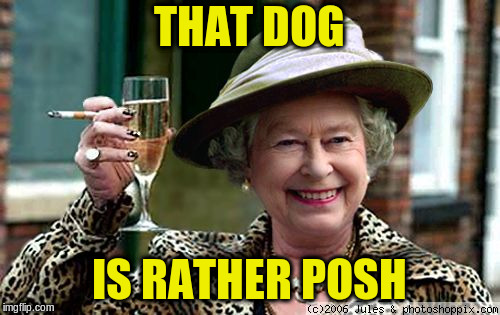 Queen Elizabeth | THAT DOG IS RATHER POSH | image tagged in queen elizabeth | made w/ Imgflip meme maker