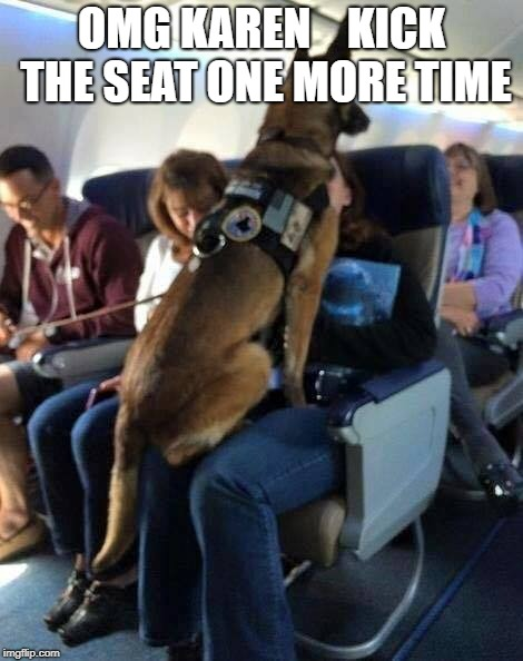 Support Dog |  OMG KAREN    KICK THE SEAT ONE MORE TIME | image tagged in omg karen,dogs,airplane | made w/ Imgflip meme maker