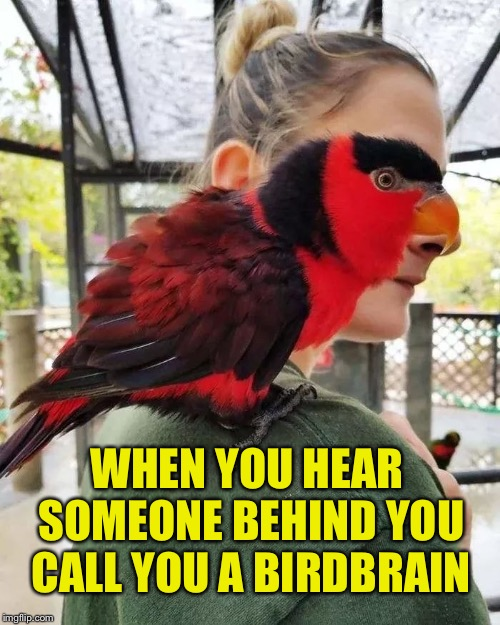 Bird face | WHEN YOU HEAR SOMEONE BEHIND YOU CALL YOU A BIRDBRAIN | image tagged in birds,perfectly timed photo,surreal,funny,memes | made w/ Imgflip meme maker