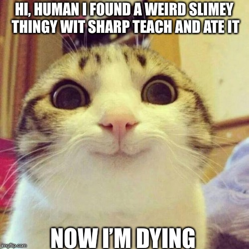 Smiling Cat | HI, HUMAN I FOUND A WEIRD SLIMEY THINGY WIT SHARP TEACH AND ATE IT NOW I'M DYING | image tagged in memes,smiling cat | made w/ Imgflip meme maker