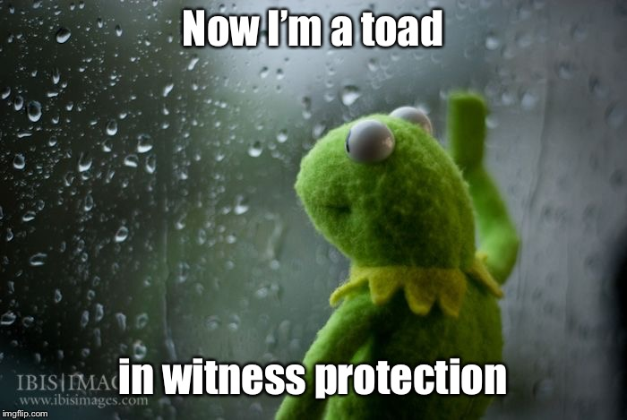 kermit window | Now I'm a toad in witness protection | image tagged in kermit window | made w/ Imgflip meme maker