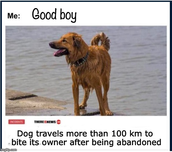 PAY BACK | Good boy Dog travels more than 100 km to bite its owner after being abandoned | image tagged in the most interesting dog in the world,abandoned,payback | made w/ Imgflip meme maker