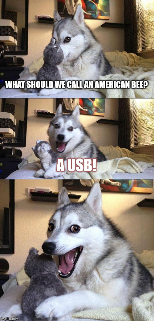 PUN intended! | WHAT SHOULD WE CALL AN AMERICAN BEE? A USB! | image tagged in memes,bad pun dog,usb,jokes,bees,computers | made w/ Imgflip meme maker