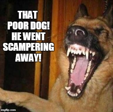 Laughing Dog | THAT POOR DOG! HE WENT SCAMPERING AWAY! | image tagged in laughing dog | made w/ Imgflip meme maker