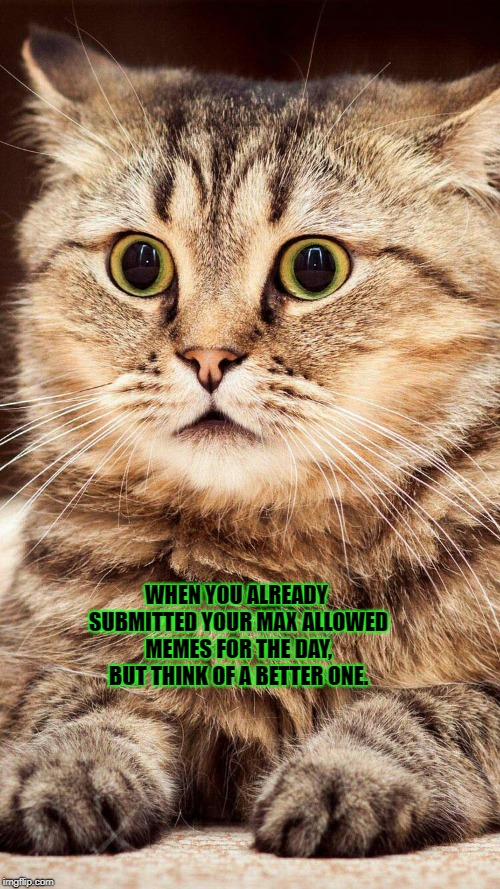 shocked cat | WHEN YOU ALREADY SUBMITTED YOUR MAX ALLOWED MEMES FOR THE DAY, BUT THINK OF A BETTER ONE. | image tagged in shocked cat | made w/ Imgflip meme maker