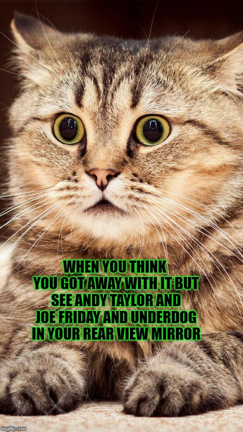 shocked cat | WHEN YOU THINK YOU GOT AWAY WITH IT BUT SEE ANDY TAYLOR AND JOE FRIDAY AND UNDERDOG IN YOUR REAR VIEW MIRROR | image tagged in shocked cat | made w/ Imgflip meme maker