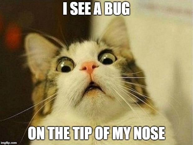 Scared Cat Meme | I SEE A BUG ON THE TIP OF MY NOSE | image tagged in memes,scared cat | made w/ Imgflip meme maker