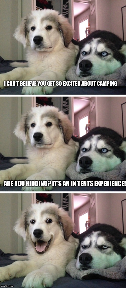 Bad pun dogs | I CAN'T BELIEVE YOU GET SO EXCITED ABOUT CAMPING ARE YOU KIDDING? IT'S AN IN TENTS EXPERIENCE! | image tagged in bad pun dogs | made w/ Imgflip meme maker