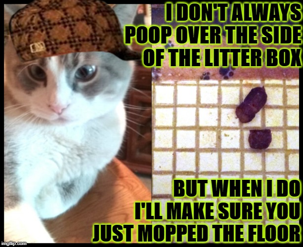 I DON'T ALWAYS POOP OVER THE SIDE OF THE LITTER BOX BUT WHEN I DO I'LL MAKE SURE YOU JUST MOPPED THE FLOOR | image tagged in i don't always | made w/ Imgflip meme maker