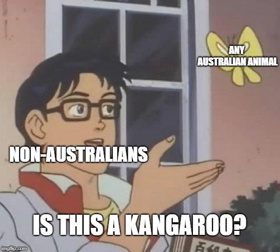 tourism  | NON-AUSTRALIANS ANY AUSTRALIAN ANIMAL IS THIS A KANGAROO? | image tagged in memes,is this a pigeon,kangaroo,australians,australia | made w/ Imgflip meme maker