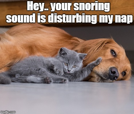 cat nap | Hey.. your snoring sound is disturbing my nap | image tagged in cats | made w/ Imgflip meme maker