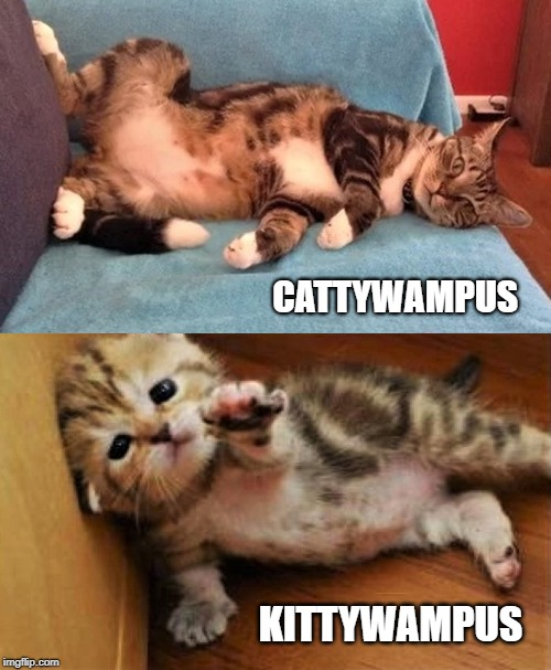CATTYWAMPUS | CATTYWAMPUS KITTYWAMPUS | image tagged in cats | made w/ Imgflip meme maker