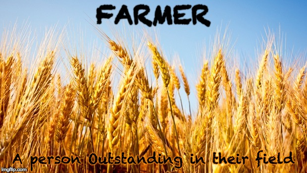 Wheat | FARMER A person Outstanding in their field | image tagged in wheat,farmer,farming | made w/ Imgflip meme maker