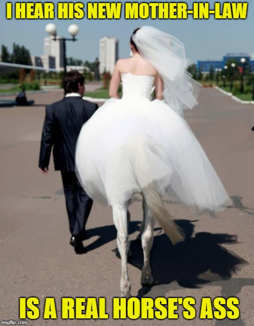 Insert clever title here | I HEAR HIS NEW MOTHER-IN-LAW IS A REAL HORSE'S ASS | image tagged in perfectly timed photo,mother in law,just married,funny | made w/ Imgflip meme maker