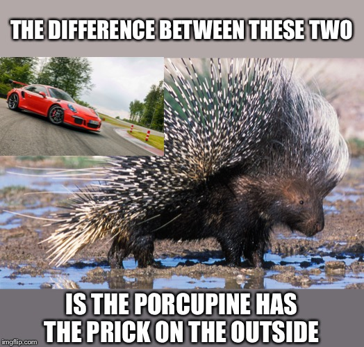Porsche and a Porcupine  | THE DIFFERENCE BETWEEN THESE TWO IS THE PORCUPINE HAS THE PRICK ON THE OUTSIDE | image tagged in porcupine,porsche | made w/ Imgflip meme maker