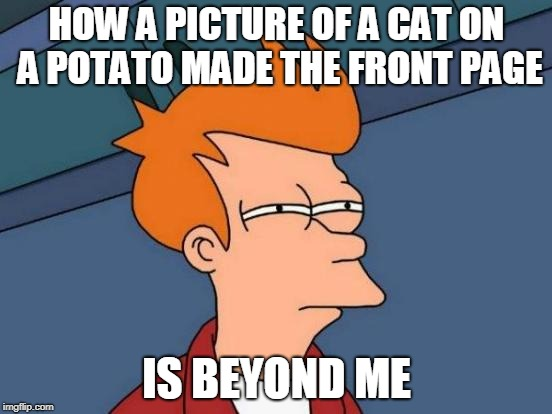 Seriously? How? | HOW A PICTURE OF A CAT ON A POTATO MADE THE FRONT PAGE IS BEYOND ME | image tagged in memes,futurama fry | made w/ Imgflip meme maker