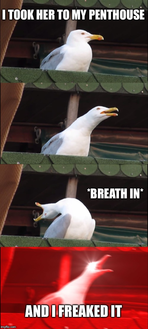 Inhaling Seagull | I TOOK HER TO MY PENTHOUSE *BREATH IN* AND I FREAKED IT | image tagged in memes,inhaling seagull | made w/ Imgflip meme maker