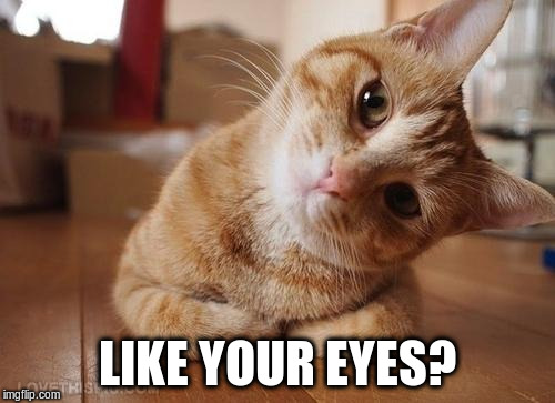 Curious Question Cat | LIKE YOUR EYES? | image tagged in curious question cat | made w/ Imgflip meme maker