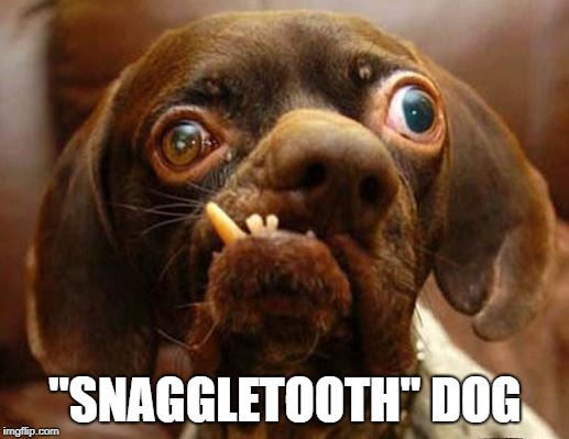 "stupid dog face | ""SNAGGLETOOTH"" DOG 